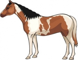 Paint, Pinto, Skewbald, Piebald - What's The Difference