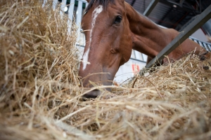 10 Golden Rules of Horse Feeding