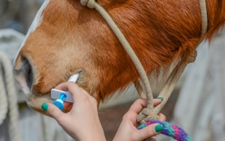 Tricks to Deworm Your Horse