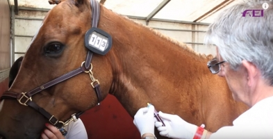 Horse Fails Drug Test After Worker Pees in Stall
