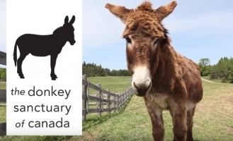 Donkey Facts