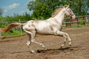 Rare Horse Colors and Unusual Patterns