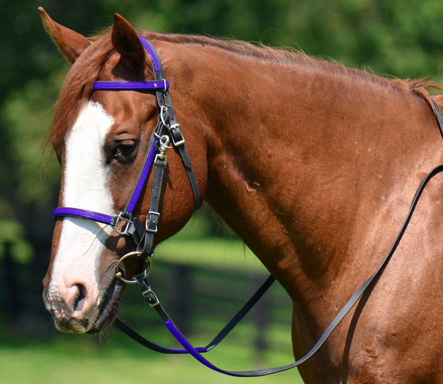 Halter Bridle Combination