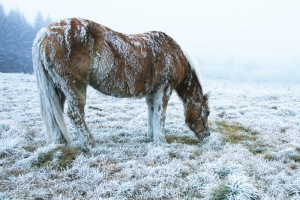 Horses and Extreme Cold