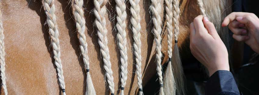 How to Plait Your Horse