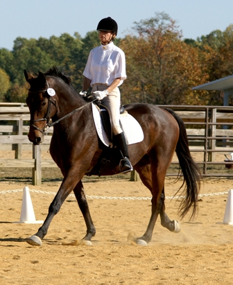 How to Experience a Dressage Show Before Competing