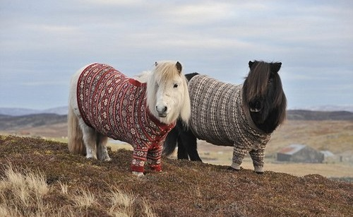 Knitted Horse Sweater