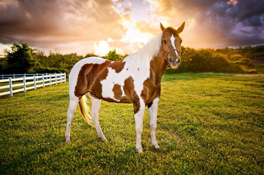 Horse Photo Contest
