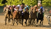 Horse Racing: Is it Cruel or Not?