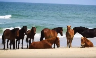 Wild Horses Weather Hurricane Dorian Well