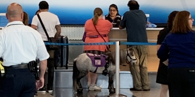 Pony Service Animal Flies In Cabin with Owner