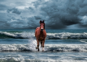 Deadly Tsunami of Horses In Outer Banks