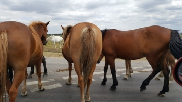 2 Ponies Killed on Texas Highway