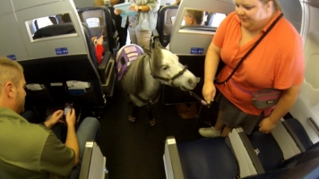 FAA Announces New Therapy Horses Regulation on Planes