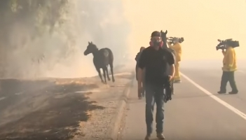 Video Of Heroic Horse Galloping Back Into California Wildfires