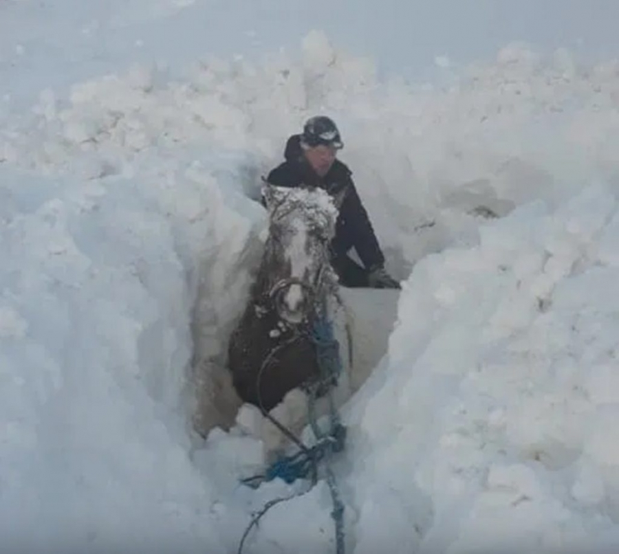 Icelandic Horses Buried in Blizzard