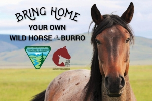 BLM Offers $1000 Incentive for Horse Adoption