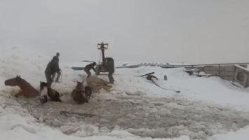 11 Mares Rescued After Falling Thru Ice