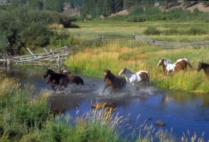 The Controversial Salt River Horses