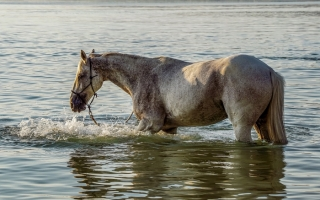 Flood Horses Still Need Homes