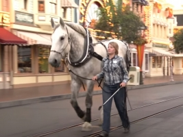 Where Did The Disneyland Horses Go During COVID