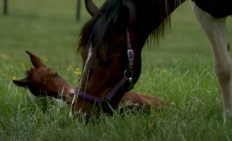 Horse That Survived Kentucky Horse Shooting Foals Healthy Pinto