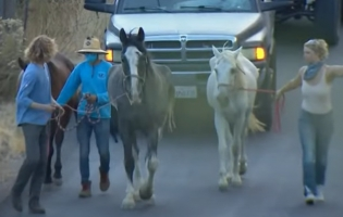 Viewers Concerned on Status of Horses in Valley Fire