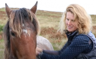 Horses of the Extremely Remote Lundy Island