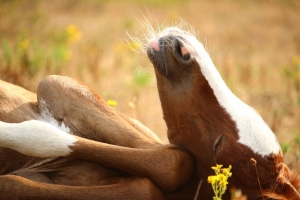 Tiny Orphan Foal Rejected by Mother