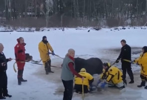 Police Horse Rescue From Icy Pond