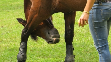 Getting Started with Horse Clicker Training