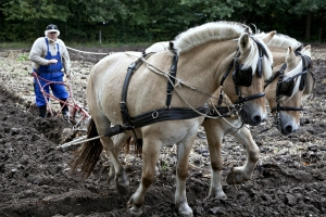 Draft Horse Plows and Types