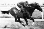 Greatest Racing Quarter Horse � Go Man Go