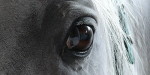 Looking Through a Horses Eyes