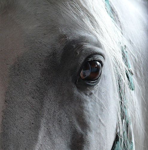 Looking through a horses eye