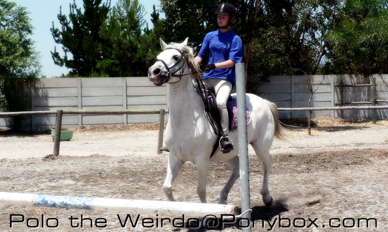 Training the Showjumping Horse