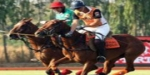The Polo Pony