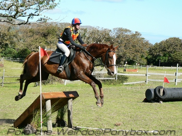 Dressage Showjumping Crosscountry