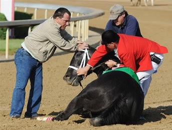 Animal Cruelty on the Racetrack