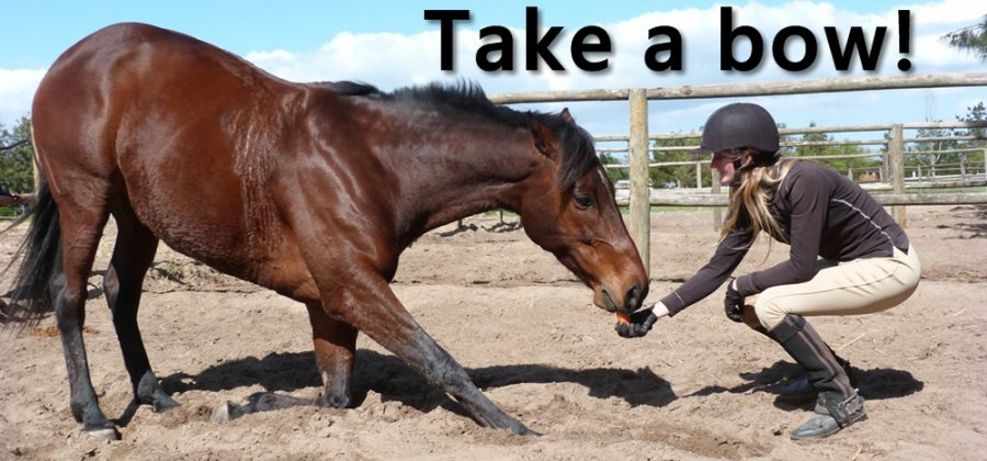 Trick Training - Teach Your Horse to Bow